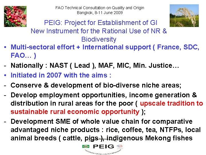 FAO Technical Consultation on Quality and Origin Bangkok, 8 -11 June 2009 • •