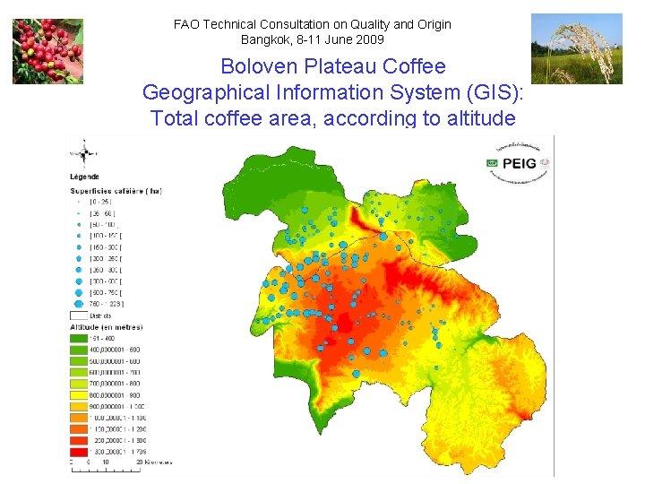 FAO Technical Consultation on Quality and Origin Bangkok, 8 -11 June 2009 Boloven Plateau