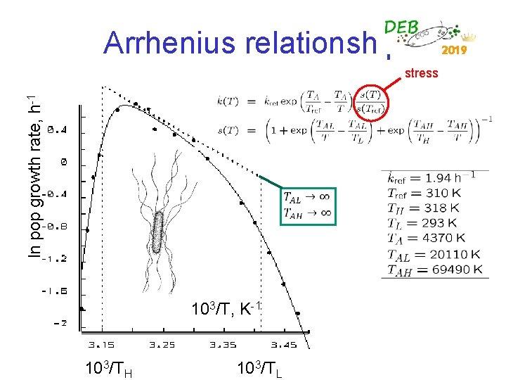 Arrhenius relationship 2019 ln pop growth rate, h-1 stress 103/T, K-1 103/TH 103/TL