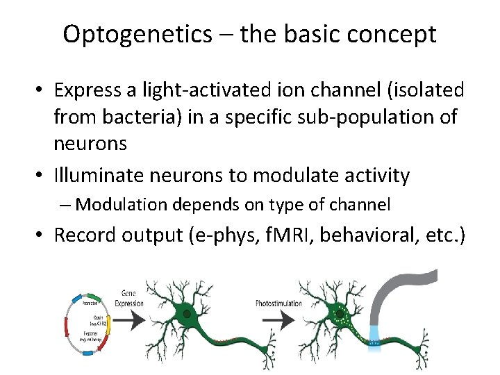 Optogenetics – the basic concept • Express a light-activated ion channel (isolated from bacteria)