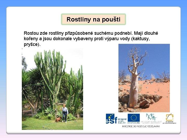 Rostliny na poušti Rostou zde rostliny přizpůsobené suchému podnebí. Mají dlouhé kořeny a jsou