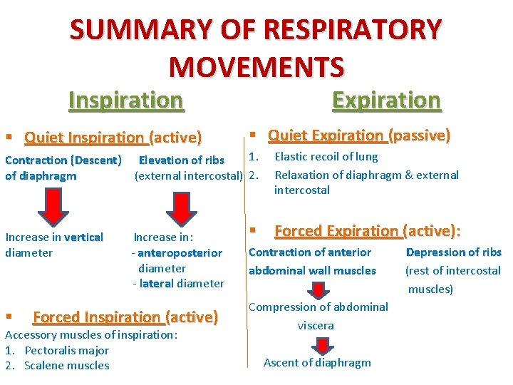 SUMMARY OF RESPIRATORY MOVEMENTS Inspiration § Quiet Inspiration (active) Expiration § Quiet Expiration (passive)