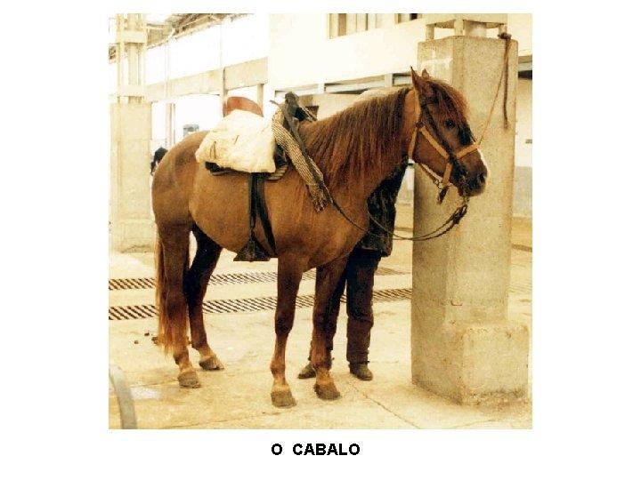 O CABALO