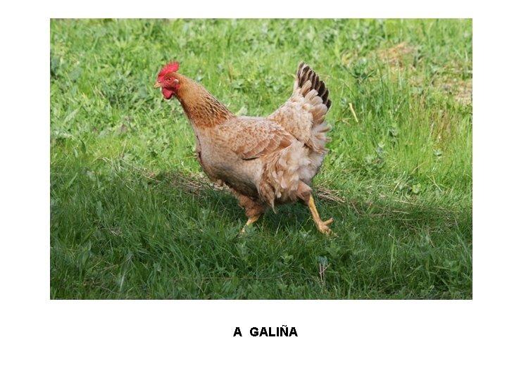 A GALIÑA