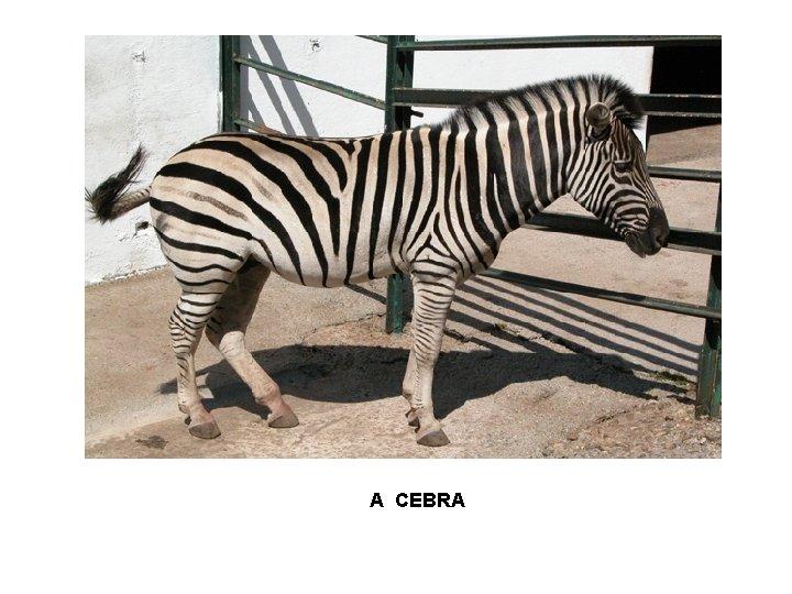 A CEBRA
