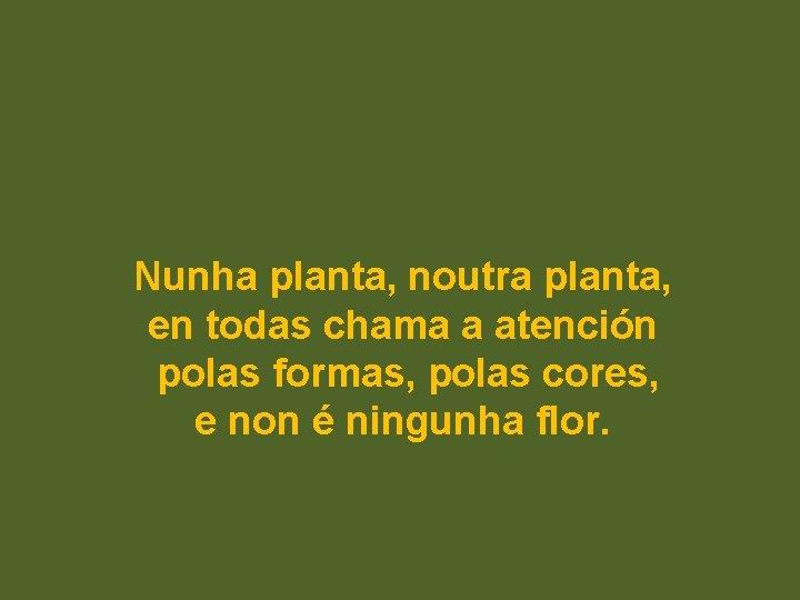 Nunha planta, noutra planta, en todas chama a atención polas formas, polas cores, e