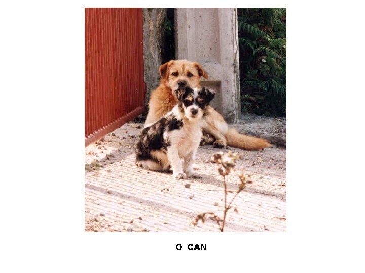 O CAN