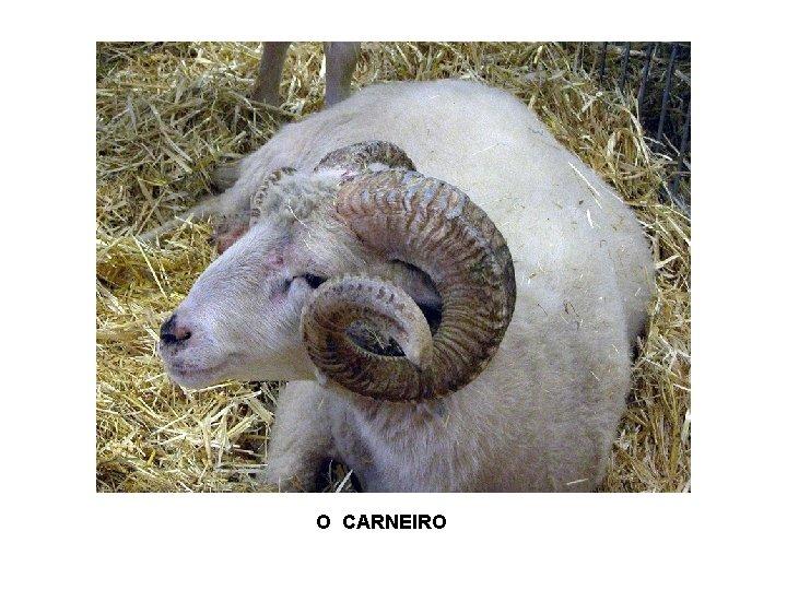 O CARNEIRO