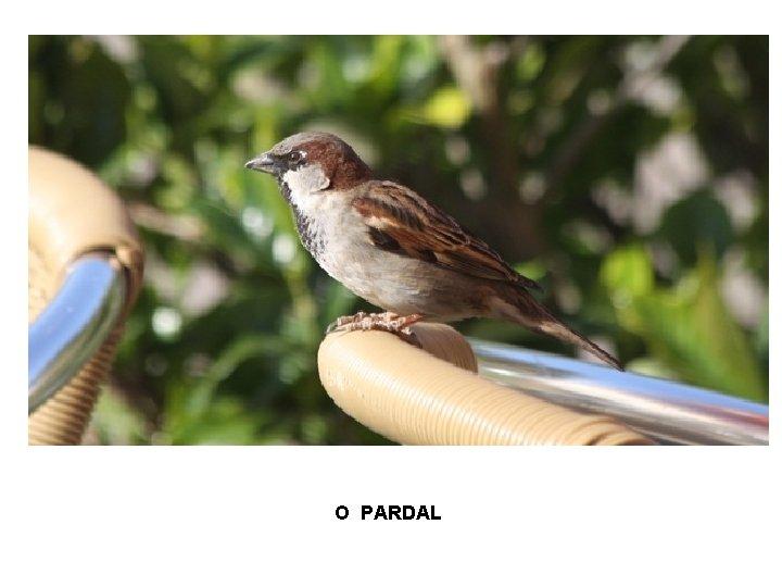 O PARDAL