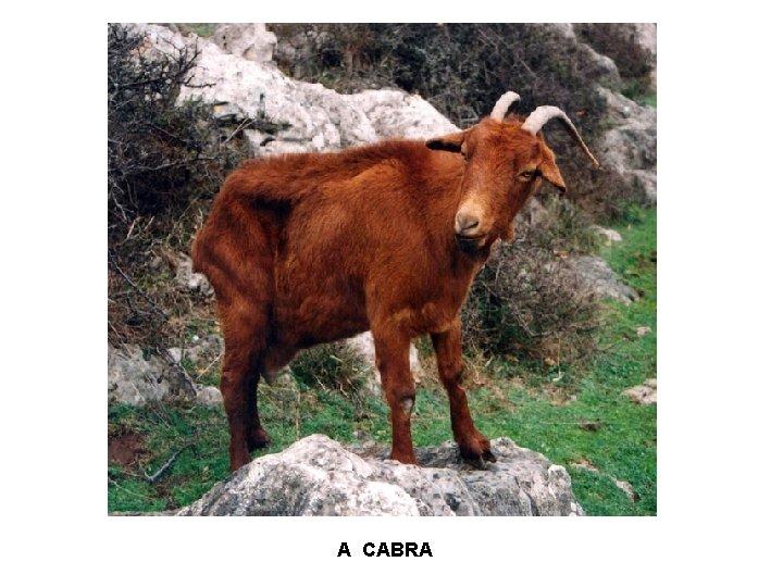 A CABRA