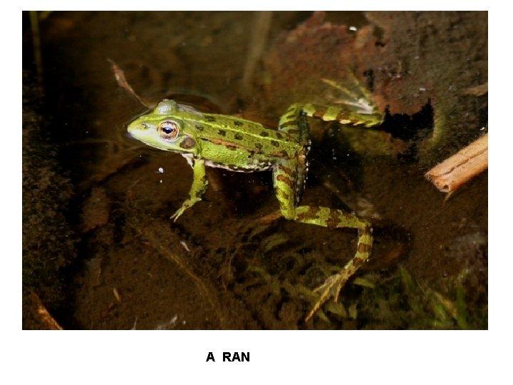 A RAN