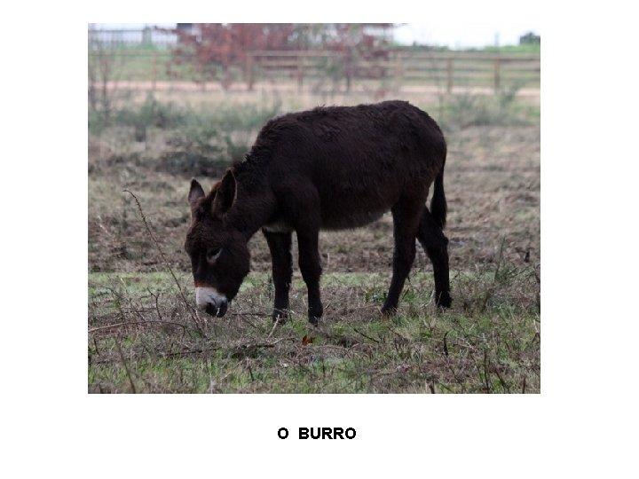 O BURRO
