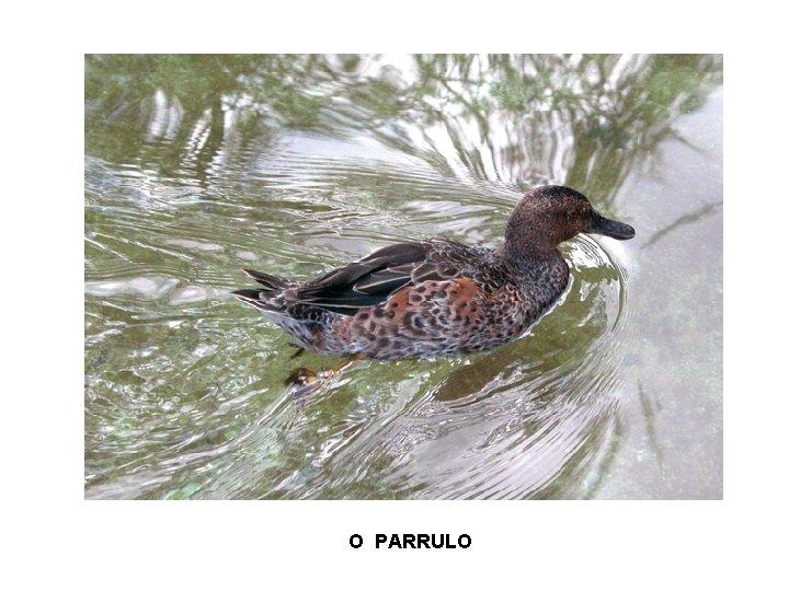 O PARRULO