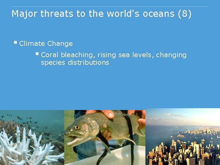 Major threats to the world's oceans (8) § Climate Change § Coral bleaching, rising