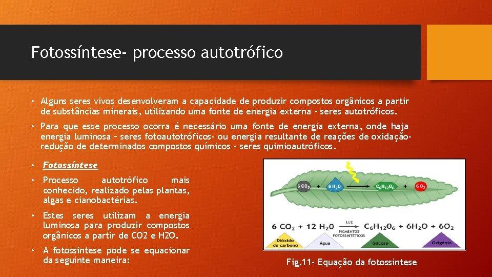 Fotossíntese- processo autotrófico • Alguns seres vivos desenvolveram a capacidade de produzir compostos orgânicos