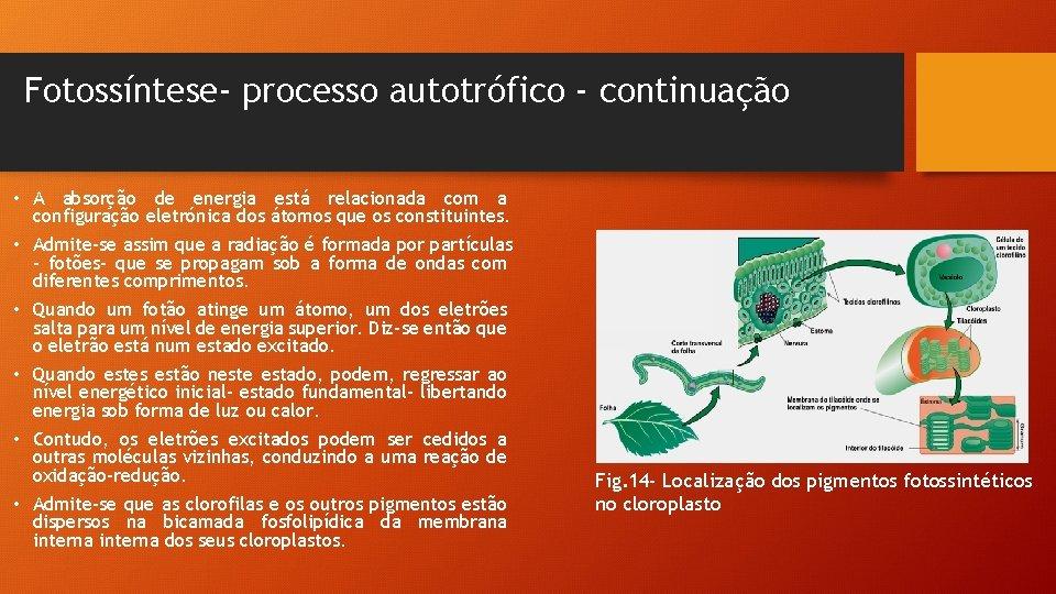 Fotossíntese- processo autotrófico - continuação • A absorção de energia está relacionada com a