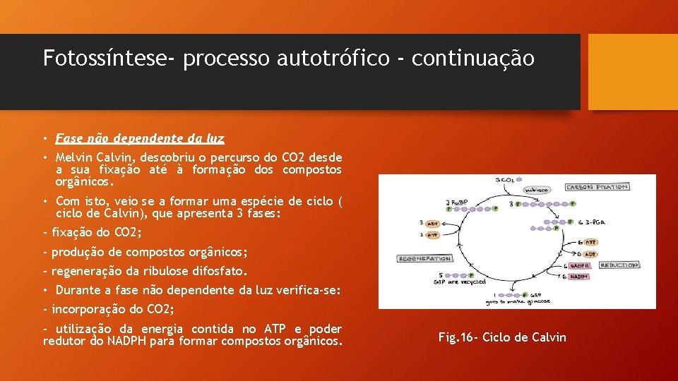 Fotossíntese- processo autotrófico - continuação • Fase não dependente da luz • Melvin Calvin,