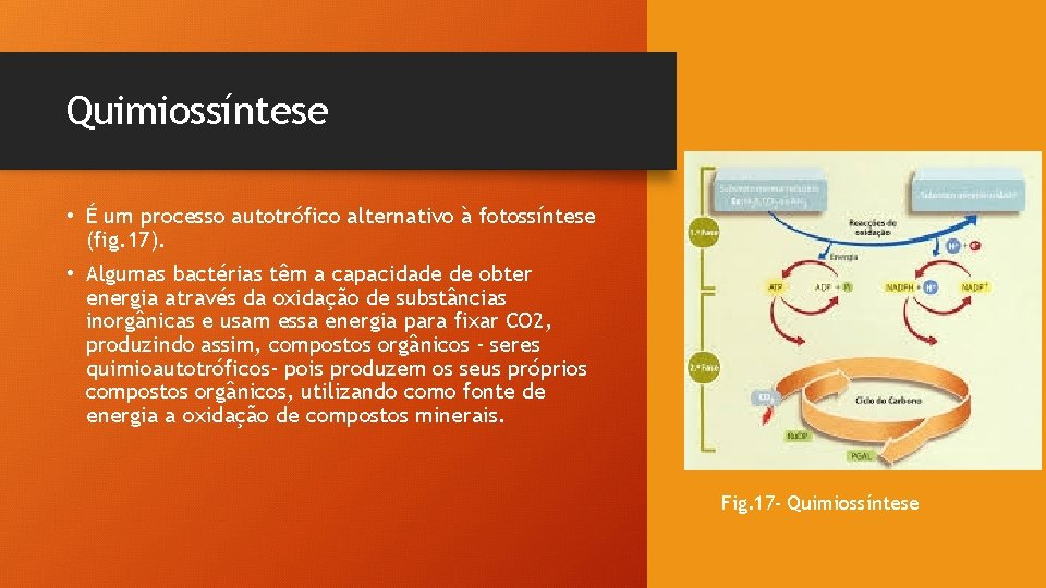 Quimiossíntese • É um processo autotrófico alternativo à fotossíntese (fig. 17). • Algumas bactérias