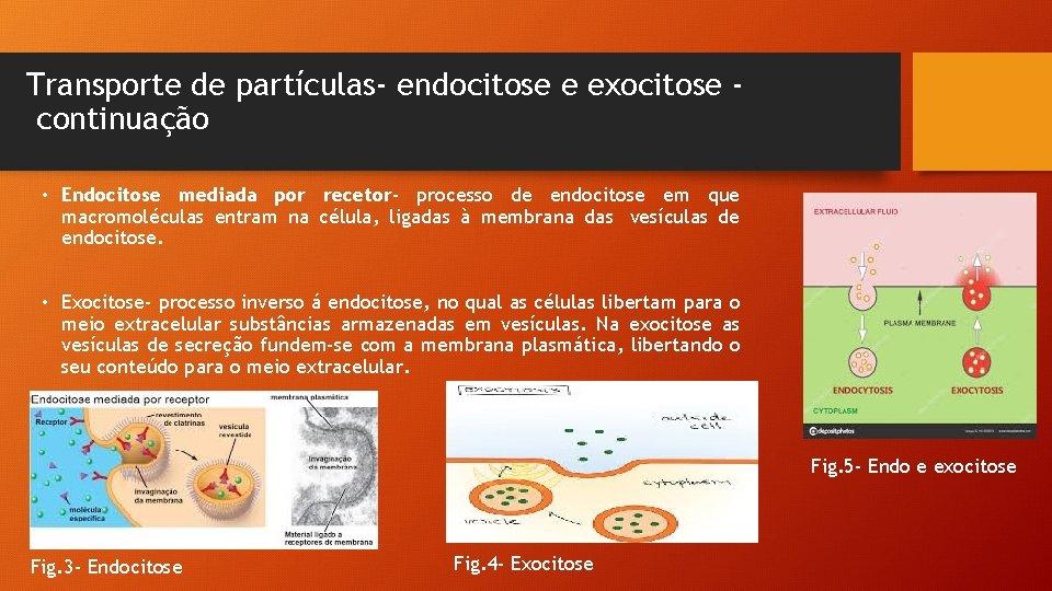 Transporte de partículas- endocitose e exocitose continuação • Endocitose mediada por recetor- processo de