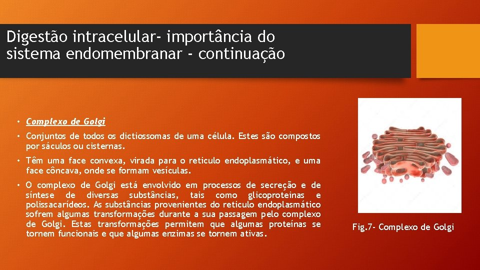 Digestão intracelular- importância do sistema endomembranar - continuação • Complexo de Golgi • Conjuntos
