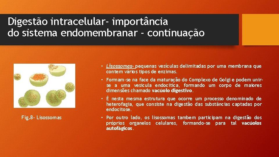 Digestão intracelular- importância do sistema endomembranar - continuação • Lisossomas- pequenas vesículas delimitadas por