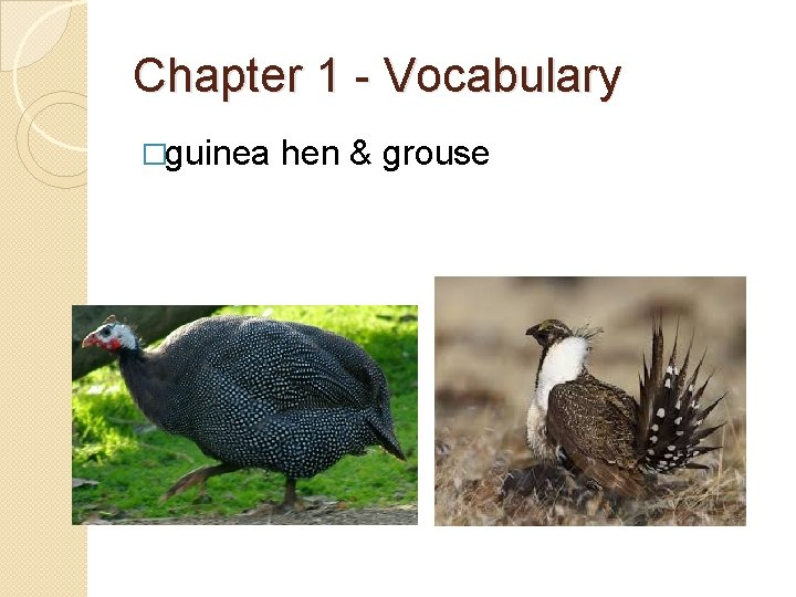 Chapter 1 - Vocabulary �guinea hen & grouse