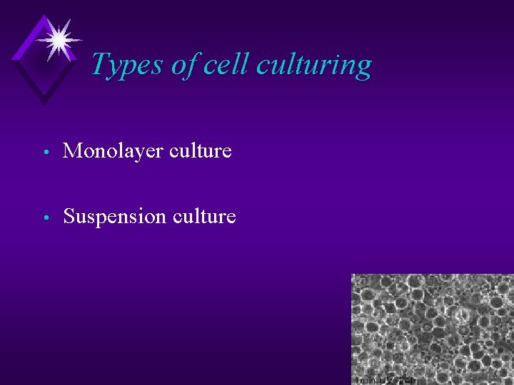 Types of cell culturing • Monolayer culture • Suspension culture