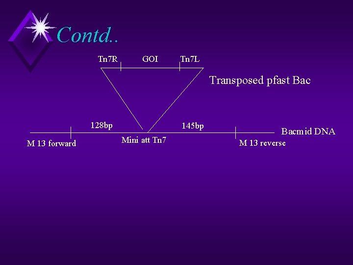 Contd. . Tn 7 R GOI Tn 7 L Transposed pfast Bac 128 bp