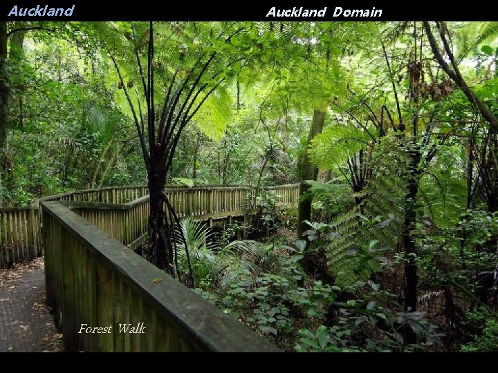 Auckland Domain Forest Walk
