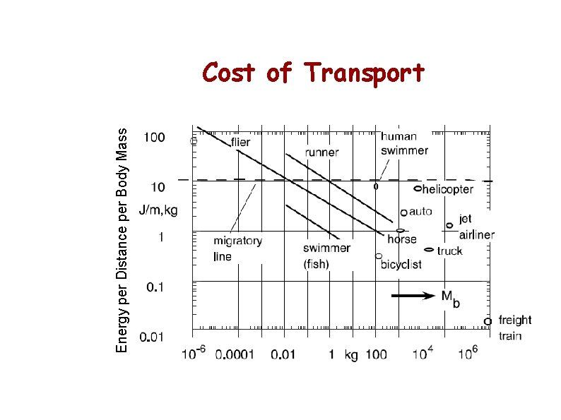 Energy per Distance per Body Mass Cost of Transport