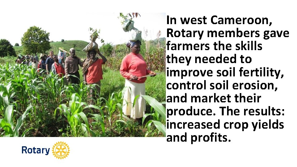 In west Cameroon, Rotary members gave farmers the skills they needed to improve soil
