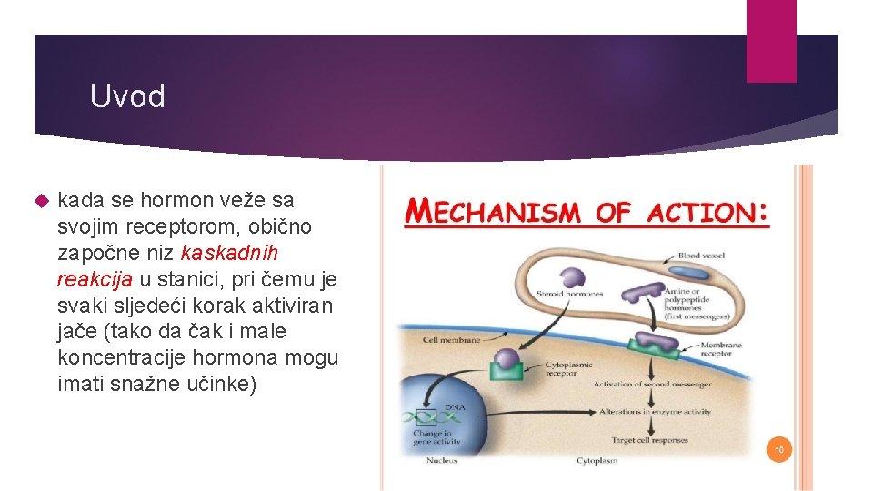 Uvod kada se hormon veže sa svojim receptorom, obično započne niz kaskadnih reakcija u