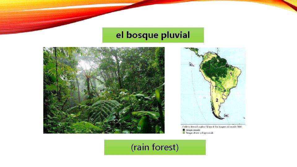 el bosque pluvial (rain forest)