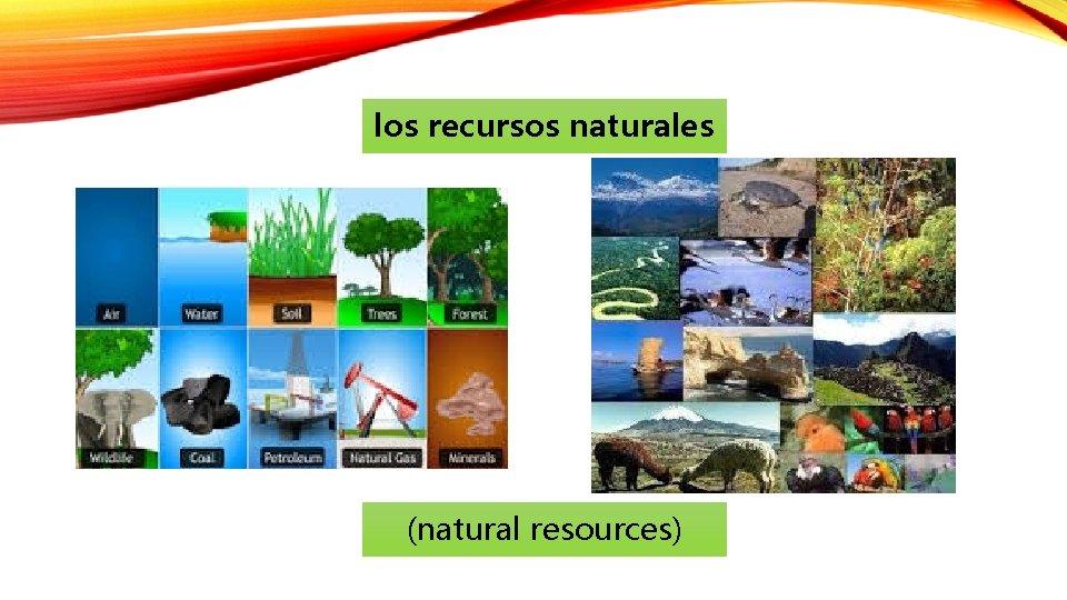 los recursos naturales (natural resources)