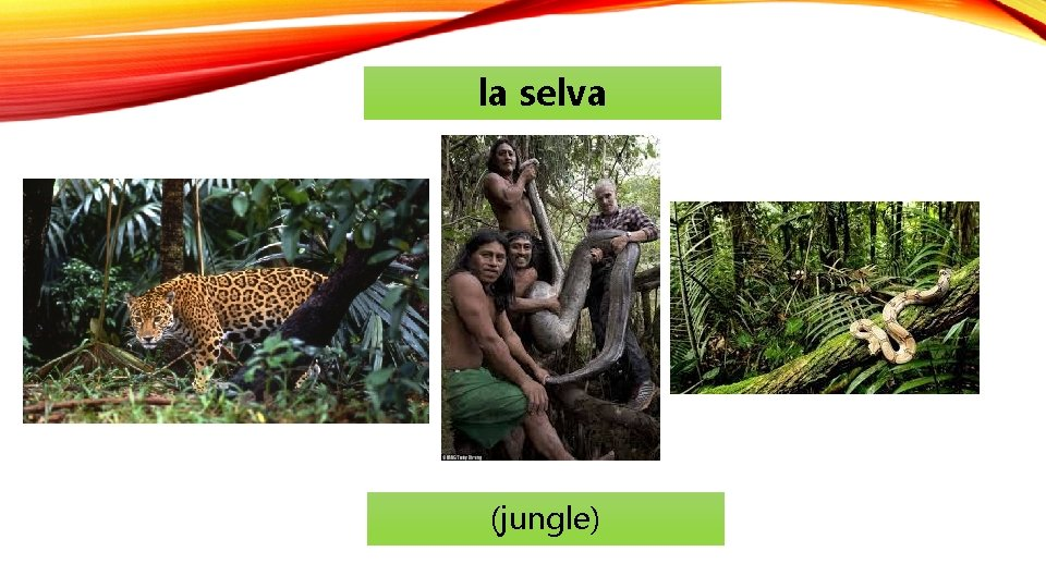 la selva (jungle)