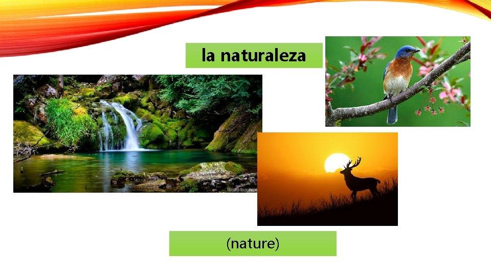 la naturaleza (nature)