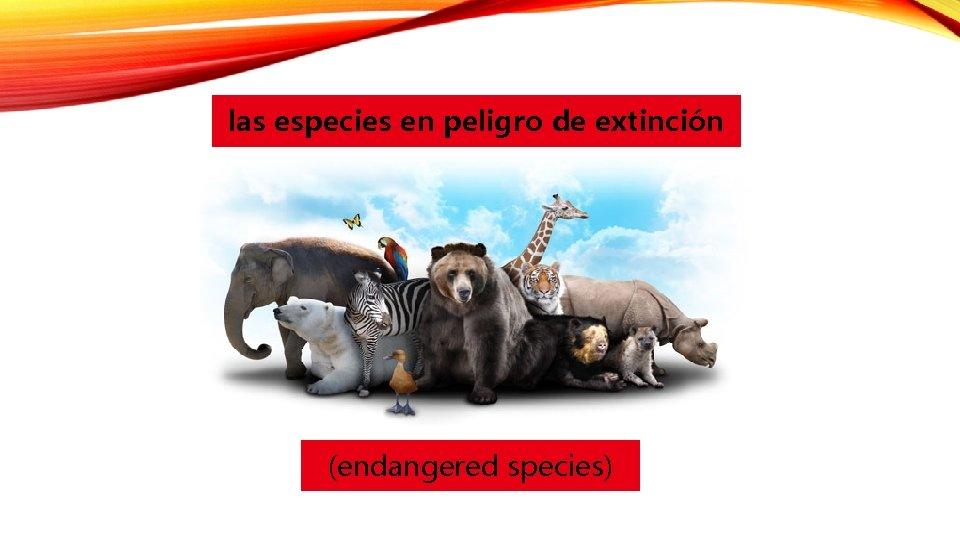 las especies en peligro de extinción (endangered species)