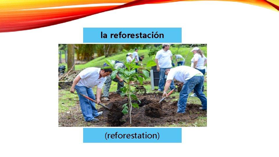 la reforestación (reforestation)
