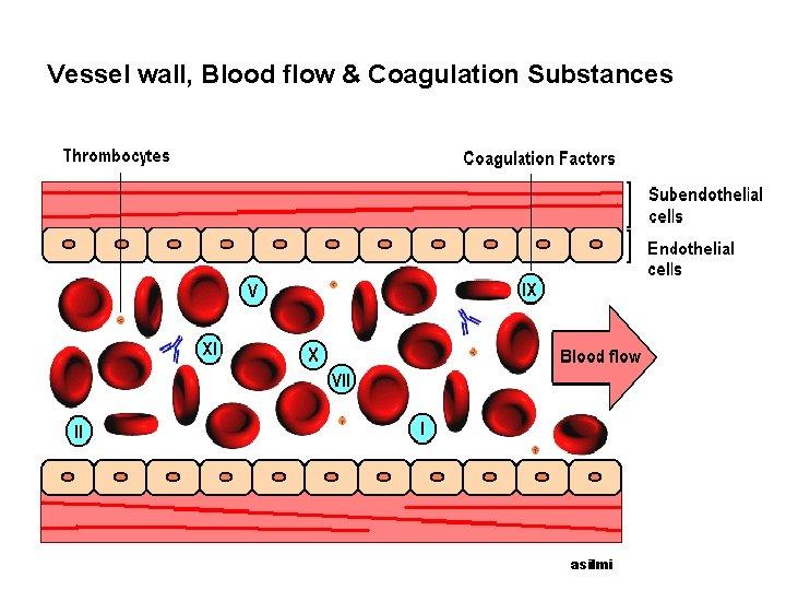 Vessel wall, Blood flow & Coagulation Substances asilmi