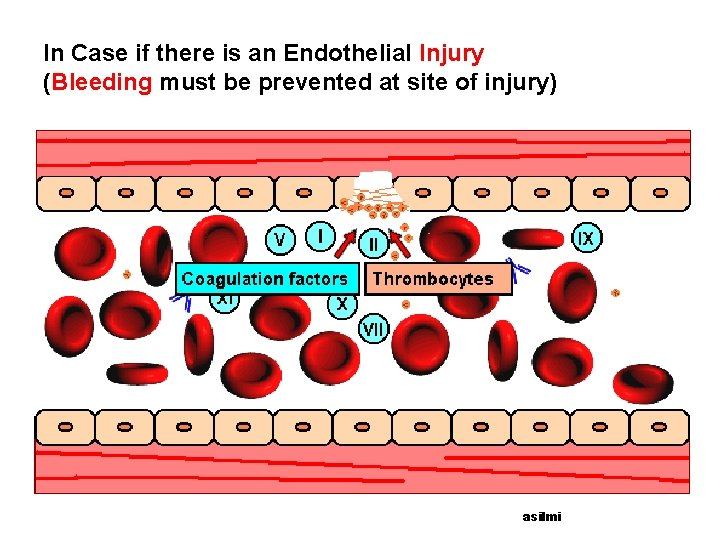 In Case if there is an Endothelial Injury (Bleeding must be prevented at site