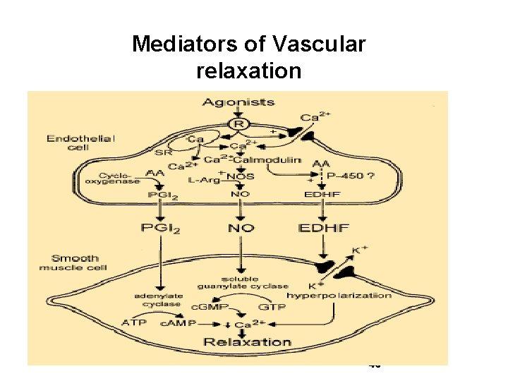 Mediators of Vascular relaxation 46