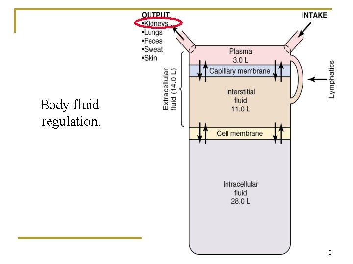 Body fluid regulation. 2