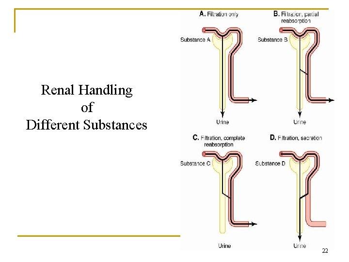 Renal Handling of Different Substances 22