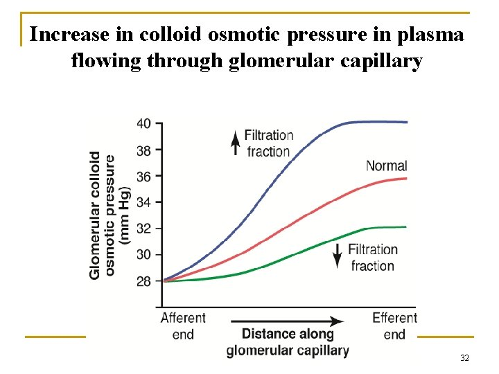 Increase in colloid osmotic pressure in plasma flowing through glomerular capillary 32