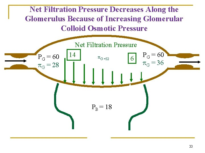 Net Filtration Pressure Decreases Along the Glomerulus Because of Increasing Glomerular Colloid Osmotic Pressure