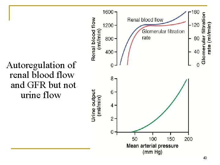 Autoregulation of renal blood flow and GFR but not urine flow 40