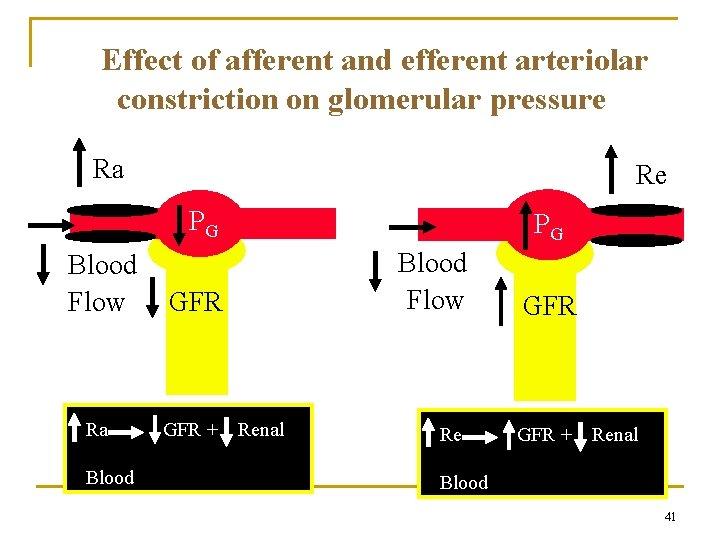 Effect of afferent and efferent arteriolar constriction on glomerular pressure Ra Re PG Blood