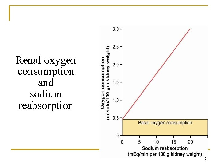 Renal oxygen consumption and sodium reabsorption 51