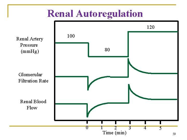 Renal Autoregulation 120 Renal Artery Pressure (mm. Hg) 100 80 Glomerular Filtration Rate Renal