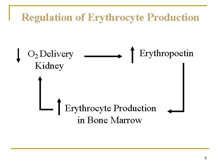 Regulation of Erythrocyte Production O 2 Delivery Kidney Erythropoetin Erythrocyte Production in Bone Marrow
